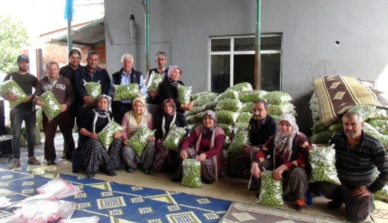 Silifke'de erik üreticisine ihracat morali