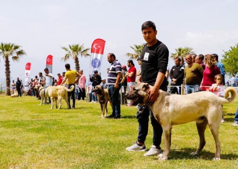 Türklere ait 3 köpek ırkı daha AB yolunda