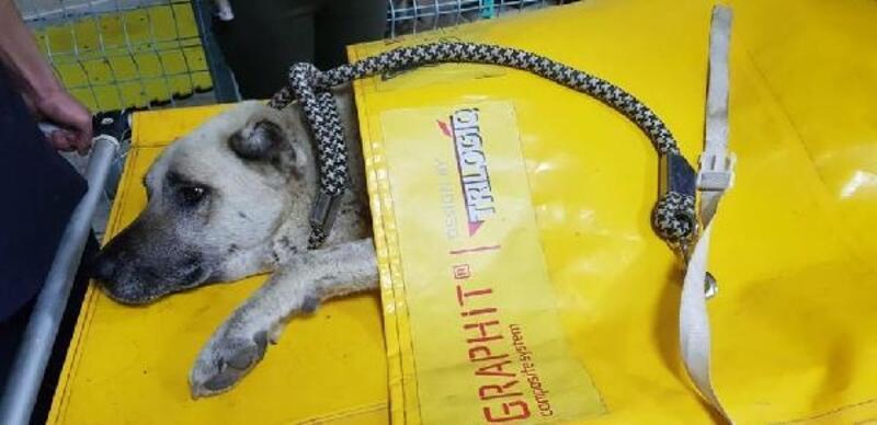 Tüfekle vurulan köpek tedaviye alındı