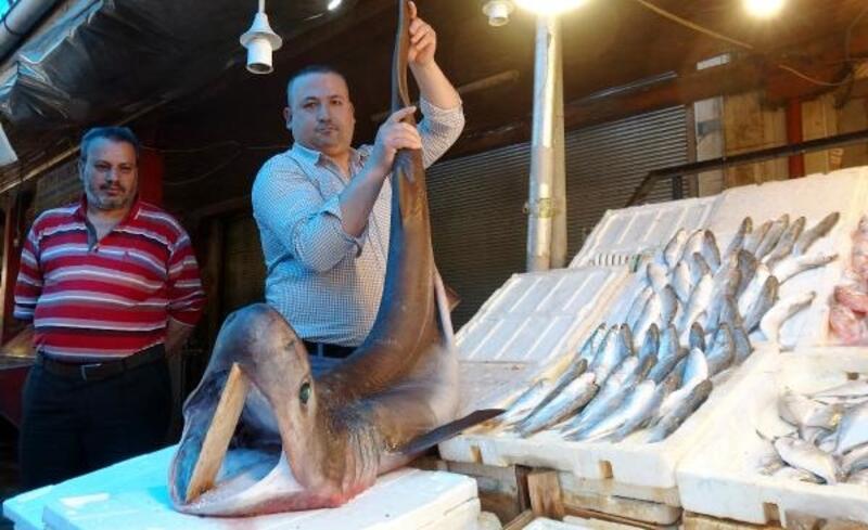Mersin'de pamuk cinsi köpek balığı ağa takıldı