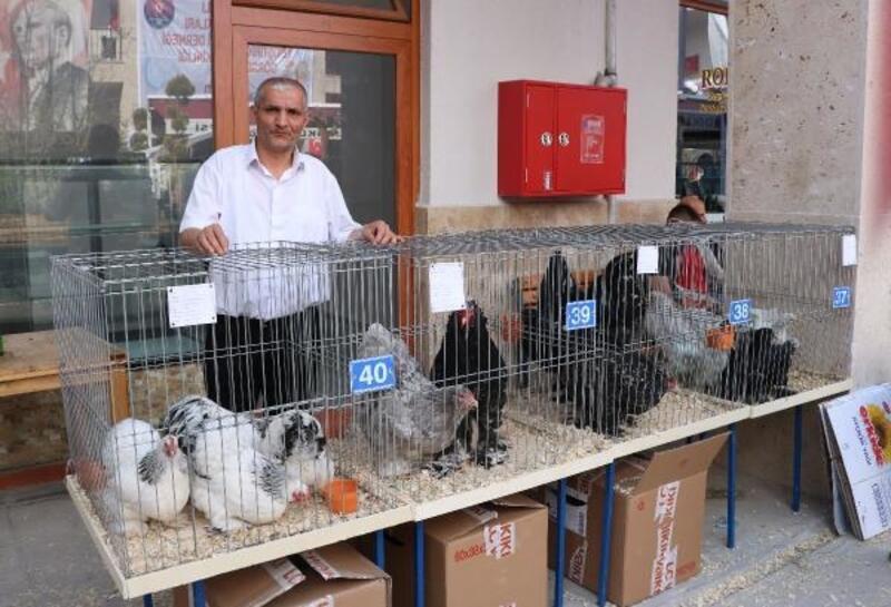 Sandıklı'da kanatlı hayvan mezatı