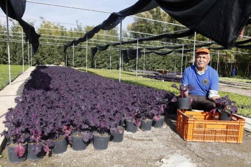 Yenimahalle'ye 300 bin çiçek