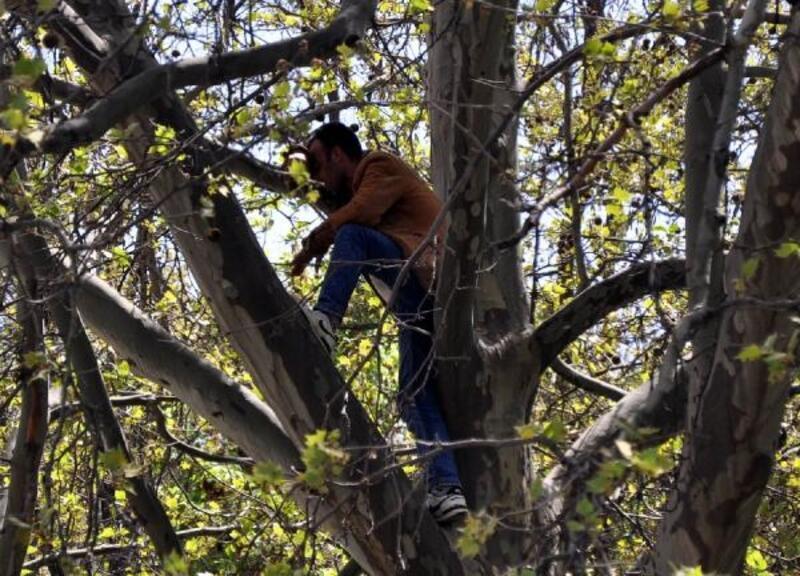 Ankara'da ağaçta intihara kalkışan kişiyi polis ikna etti
