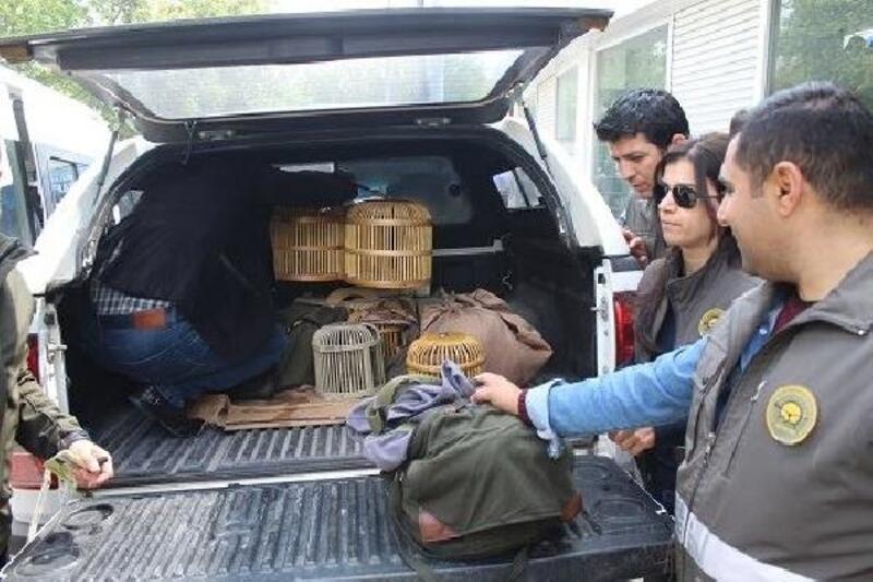 Şanlıurfa'da satılmak istenen 16 kınalı keklik ele geçti