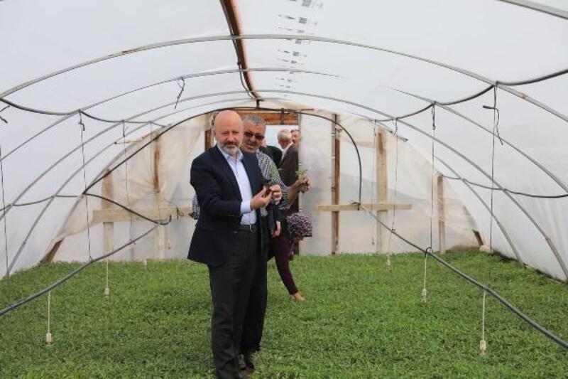 Kocasinan Belediyesi, 550 bin domates fidesi dağıtacak