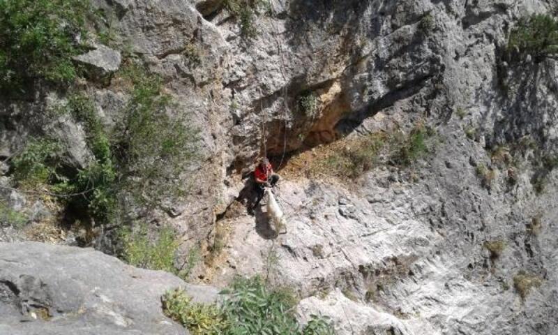 Kozan'da hamile keçi uçurumdan kurtarıldı