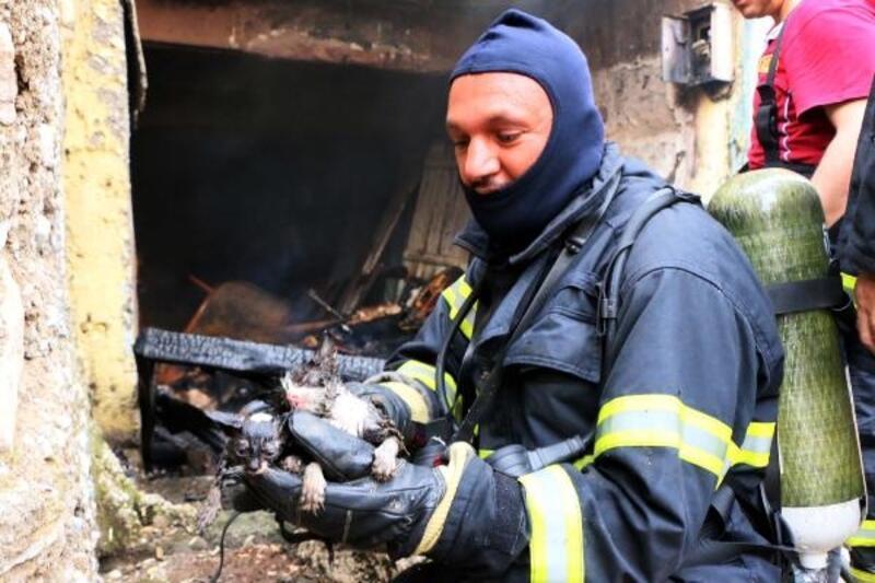 Evde çıkan yangında alevlerin arasında kalan kedileri itfaiye kurtardı