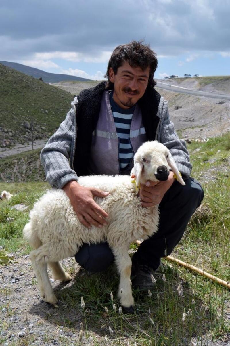 Besiciler 4 bin liraya çoban bulamıyor