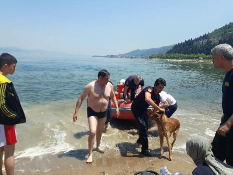 Denize giren köpeği için canından oluyordu