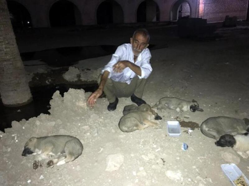 Sokaktaki yavru köpekleri sütle besleyip, uyuttu