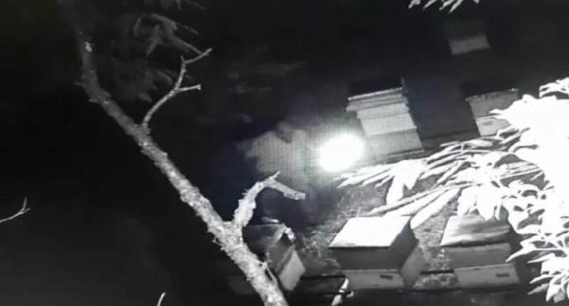 Kovanlara zarar veren kişi kameraya yakalandı