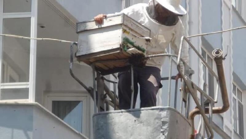 Malkara'da arı paniği