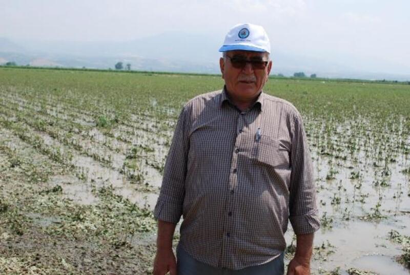 Salihli'de tarım arazilerinde dolu ve sağanak zararı