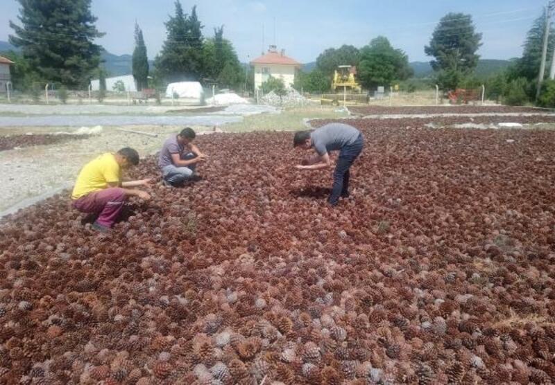 Tohumlar yanan alanlara ekiliyor