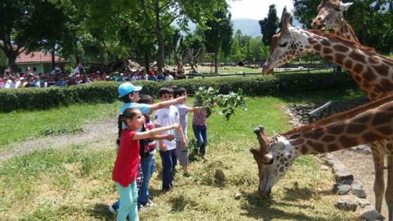 Karnesi ile gelen öğrenciye hayvanat bahçesi ücretsiz