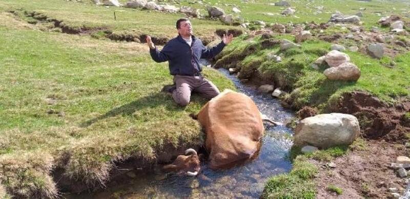 Irmakta telef olan ineğine sarılıp gözyaşı döktü