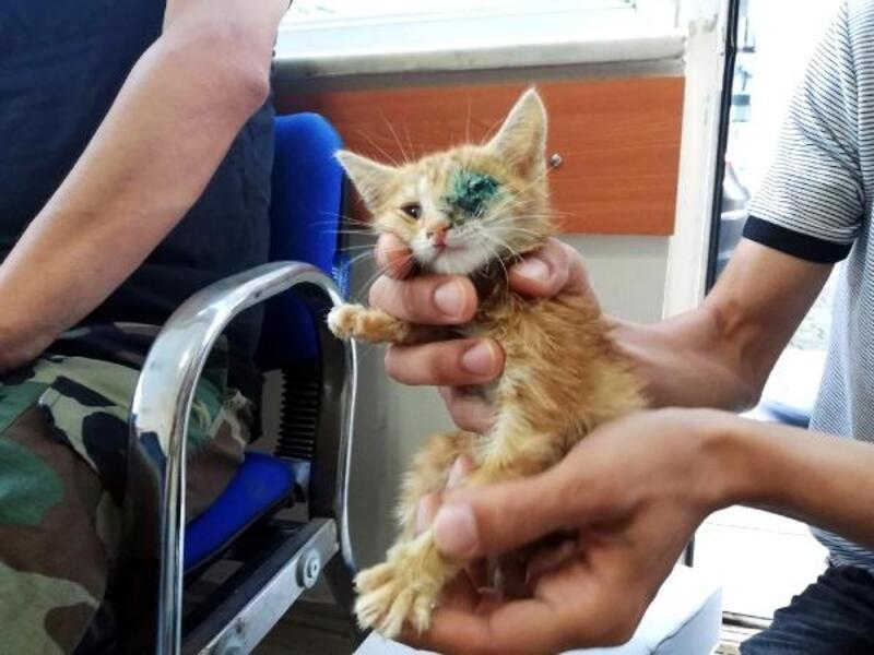 Yavru kedinin gözüne giren ot çıkarıldı