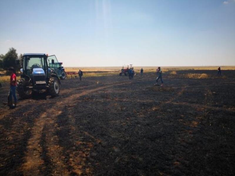 Derik'te 50 dönümlük ekili buğday, küle döndü
