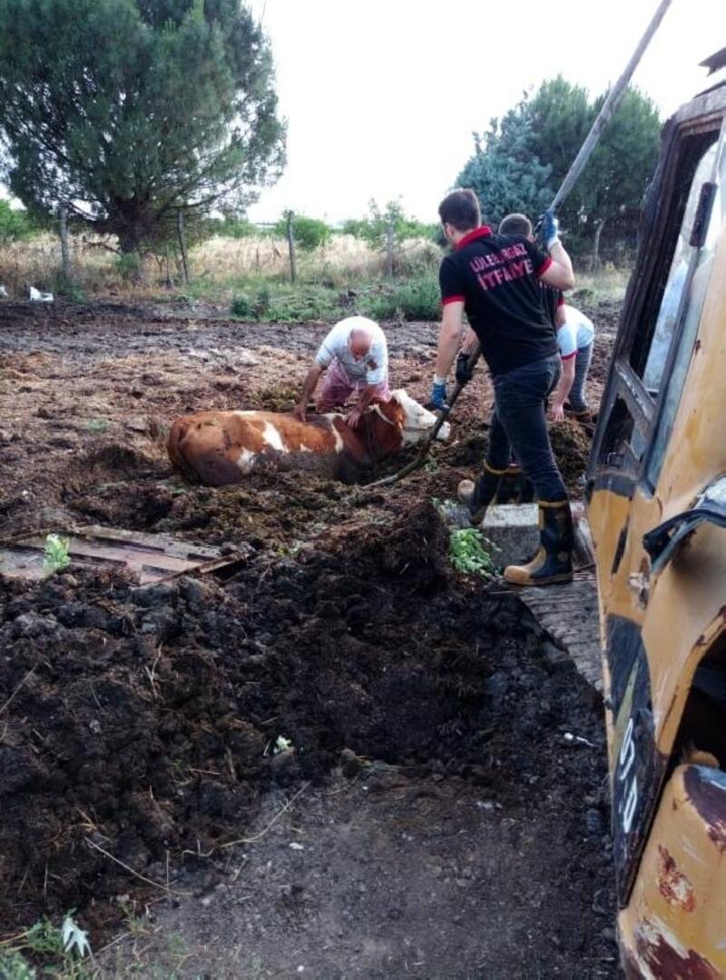 Çamura saplanan ineği itfaiye kurtardı