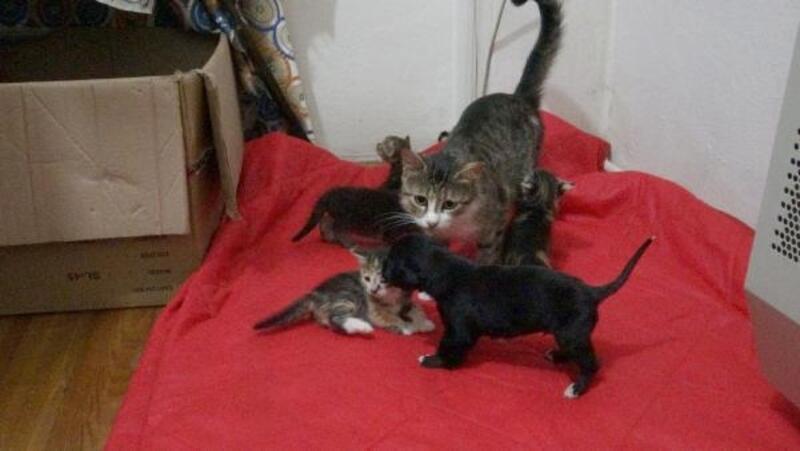 Annesi telef olan yavru köpeği, 'Prenses' isimli kedi emziriyor
