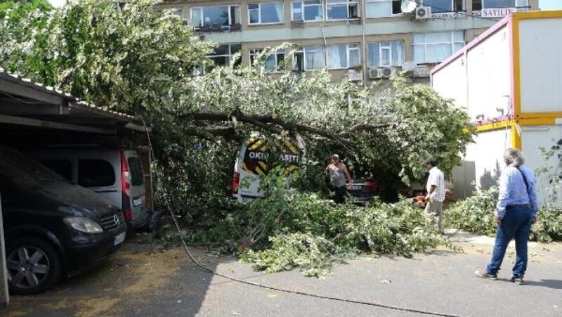 Sarıyer'de budanmasına engel olunan ağaç araçların üzerine devrildi