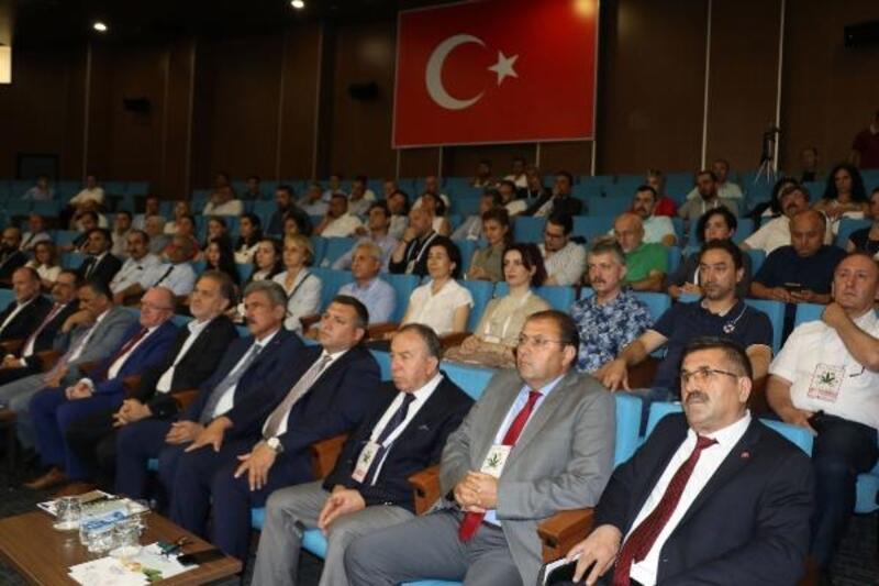 Türkiye'de kenevir ekim alanları bin dekarın üzerine çıktı