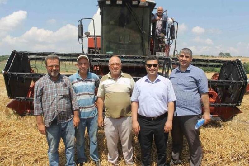 Buğday hasadı yapılan tarlalarda dane kontrolleri yapılıyor