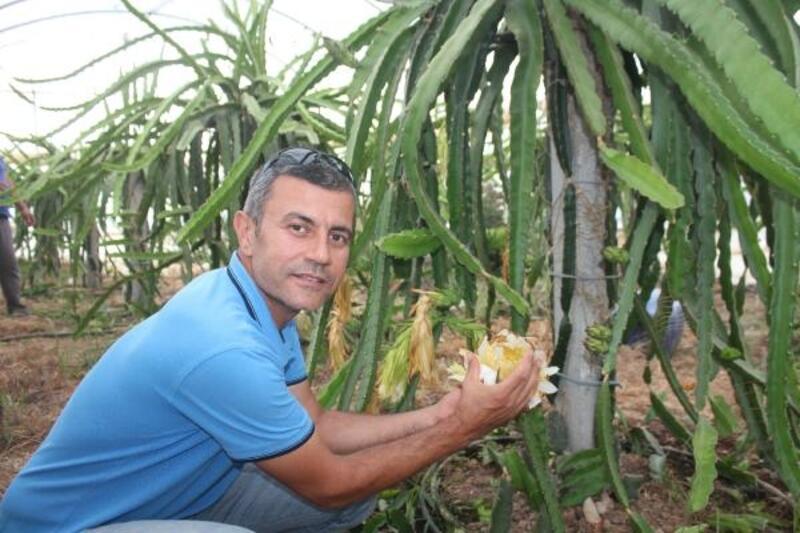 Türkiye'nin ilk tropikal meyve kooperatifi