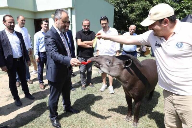 Bursa Hayvanat Bahçesi'nde zebra sayısı 18'e çıktı