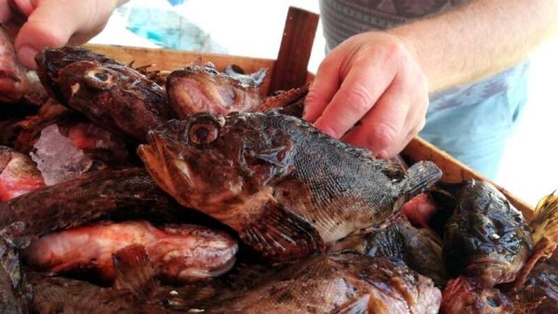 Görüntüsü çirkin balık iskorpite ilgi