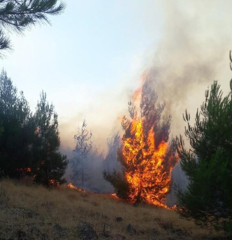 Anız yangını ormana sıçradı, 10 hektar alan kül oldu