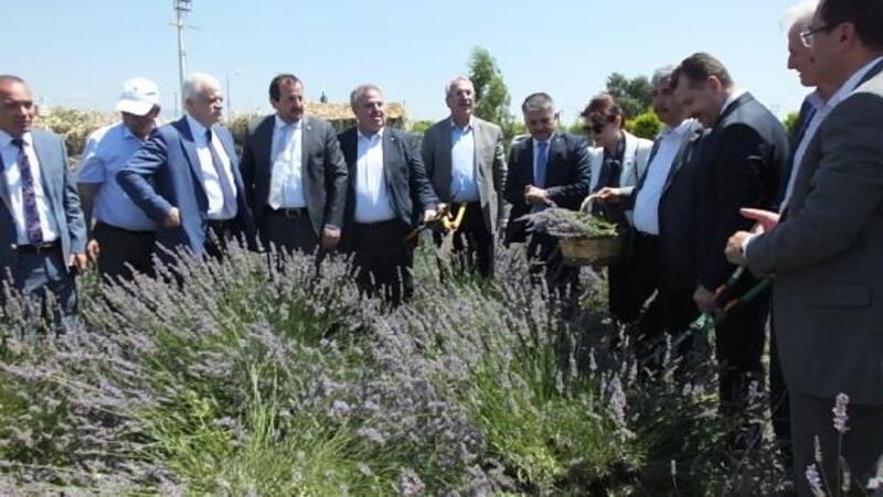 Burhaniye'de 'Tarladan Hasada Aromaterapi Eğitim Şenliği' düzenlendi