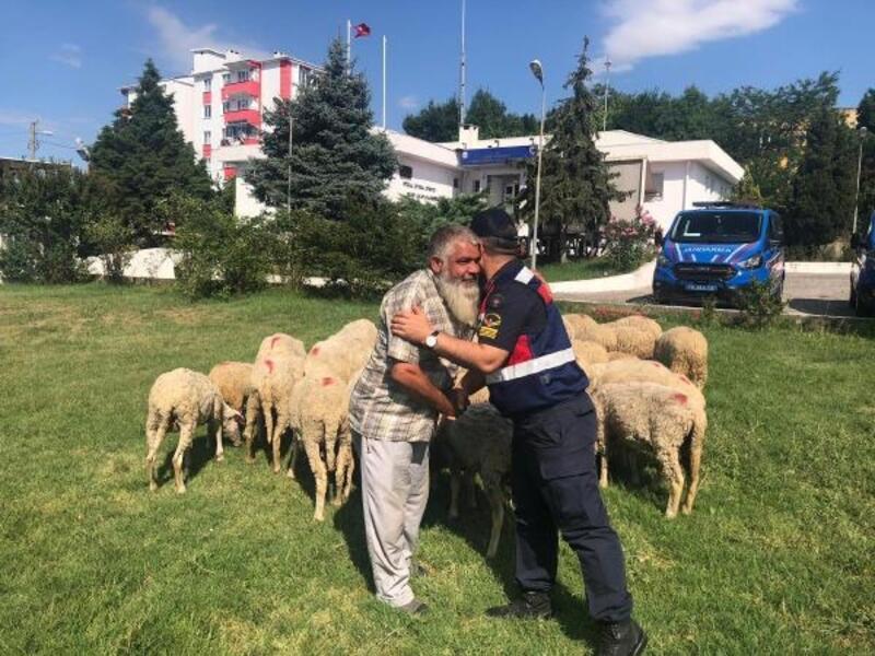 İstanbul'da çalınan 39 küçükbaş, Tekirdağ'da bulundu
