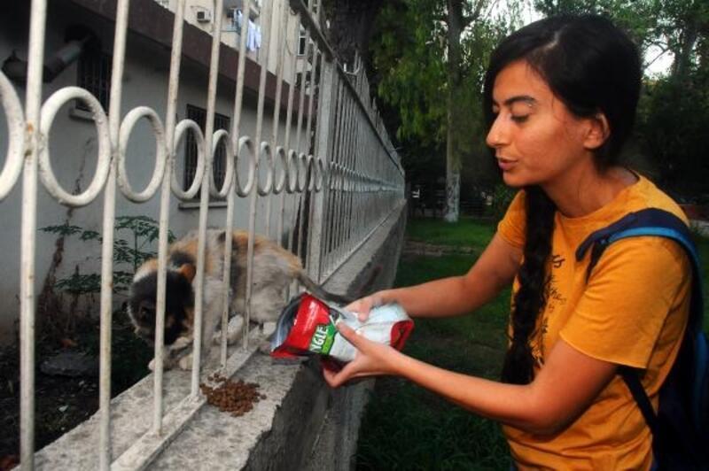 Anne- kızın sokak kedilerini besleyen genç kadını darbettiği iddiası