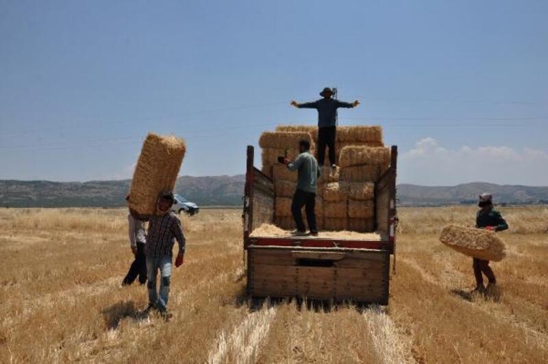 Samana rağbet çiftçinin yüzünü güldürüyor