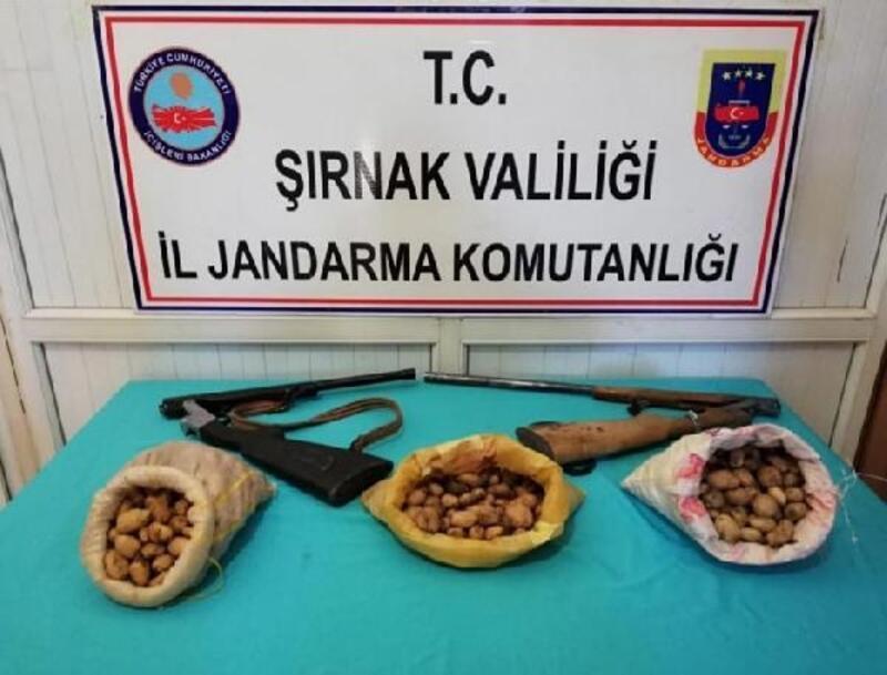 Şırnak'ta salep soğanı toplayan 3 kişiye 204 bin para cezası