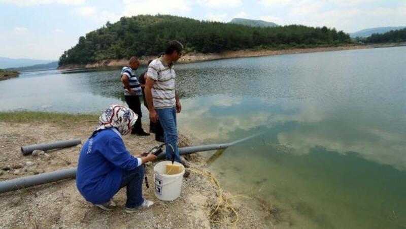Aslantaş Barajı'na 2 milyon yavru sazan bırakıldı