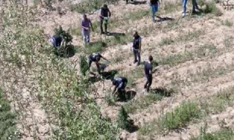 Denizli'de 93 kilo esrara 3 gözaltı