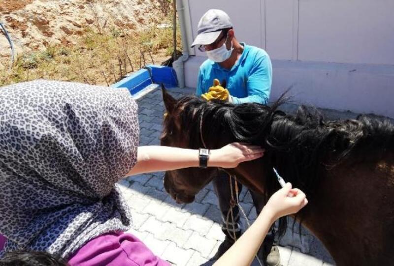 Mardin'de yaralı at, tedavi için İzmir'e gönderildi