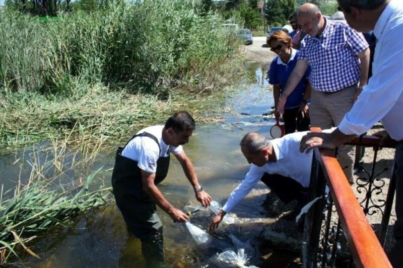 Bolu'da göllere sazan balığı yavrusu bırakıldı