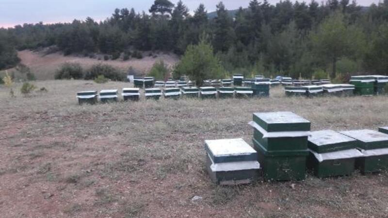 300 bin liralık arı kovanı hırsızları yakalandı