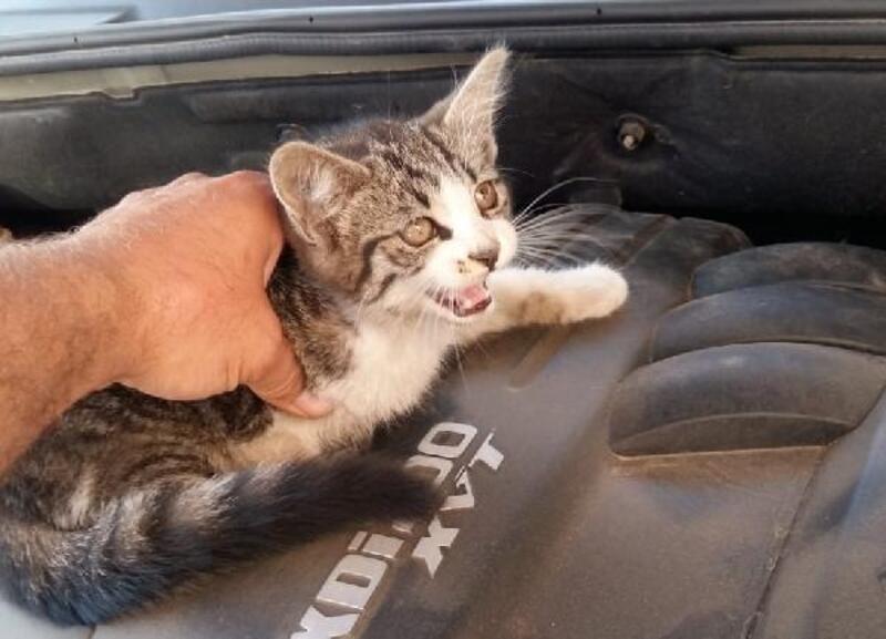 Aracın motoruna sıkışan yavru kediyi çocuklar fark etti