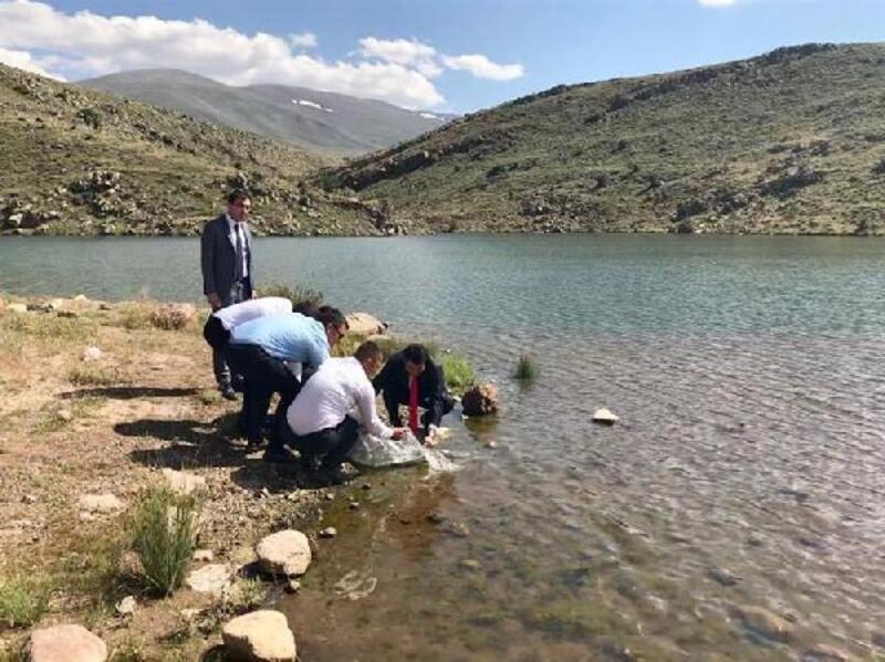 Niğde'de göletlere 38 bin yavru sazan balığı bırakıldı