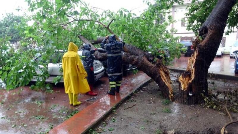 Otoparkta devrilen ağaç, 4 otomobile zarar verdi