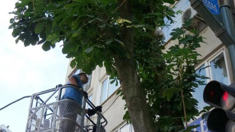 Ağaçta mahsur kalan yavru kediyi itfaiye kurtardı