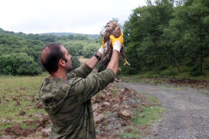 Tedavi edilen kuşlar doğal ortamına bırakıldı