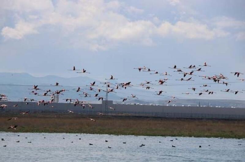 Aksaray'da gençler, 26 farlı kuş türü gözlemledi