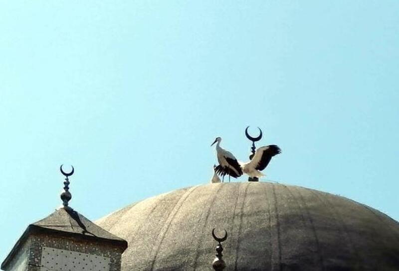 Cami kubbesinde mahsur kalan leylekler kurtarıldı