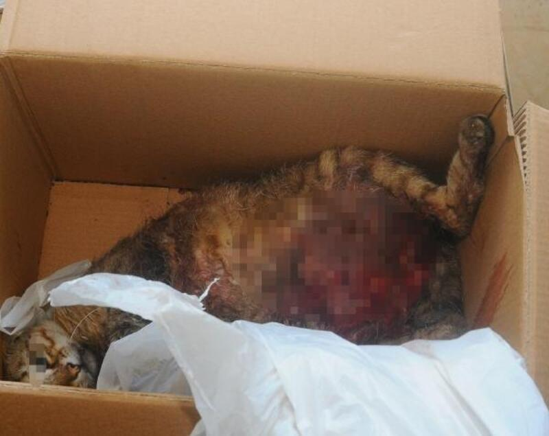 Pitbull cinsi köpeğe 'Çıtır'ı parçalatan üç çocuk yakalandı