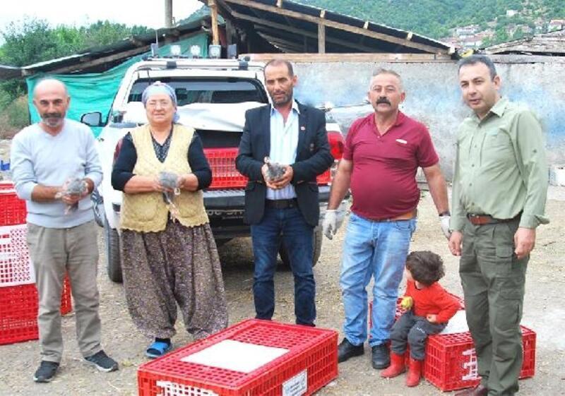 Tokat'ta KKKA Hastalığına karşı Beç tavuğu dağıtıldı